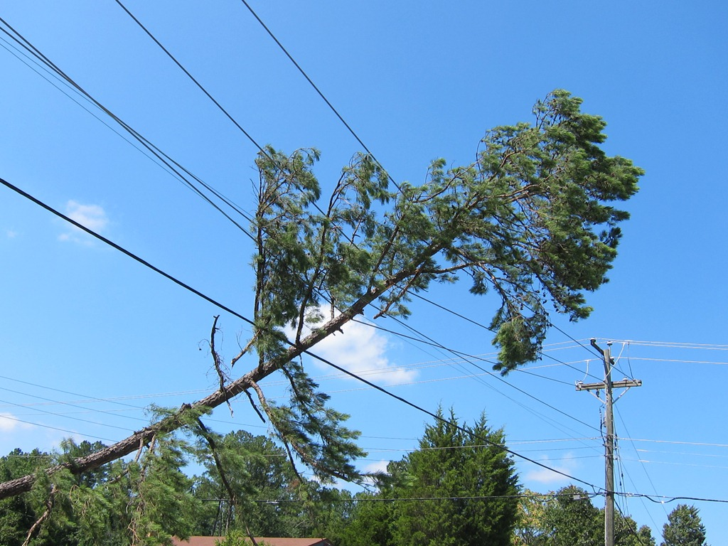 Image result for fallen tree power line