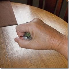 baby humming bird 028
