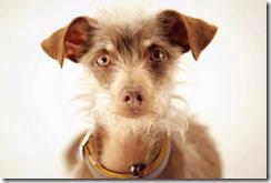 weego-dog