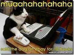 ebaycat
