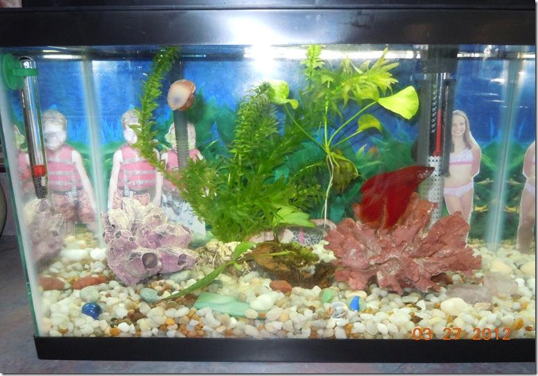 fish 020