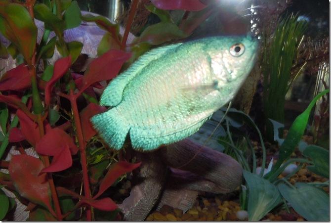fish 064