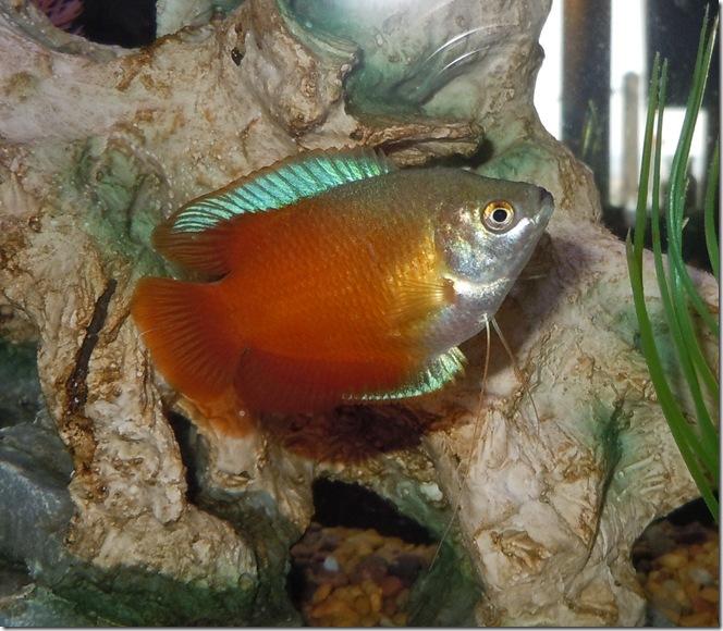 fish 086