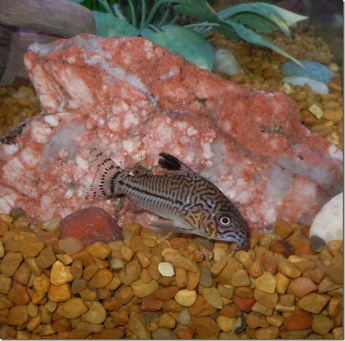 fish 092