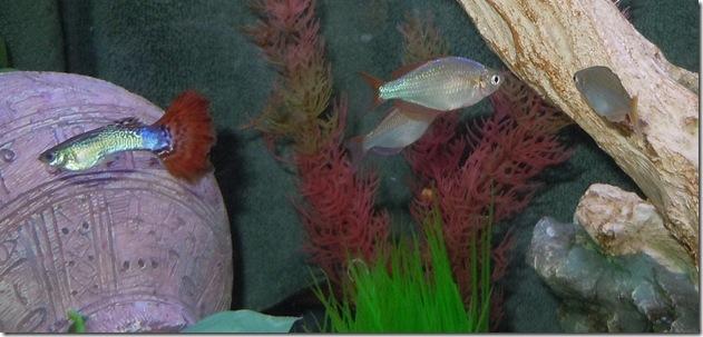 fish 046