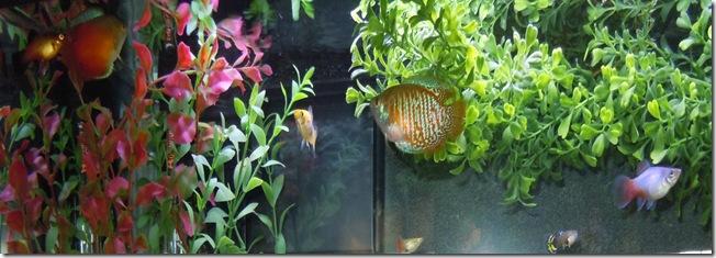 fish 057