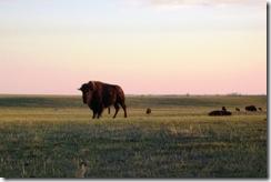prairie21