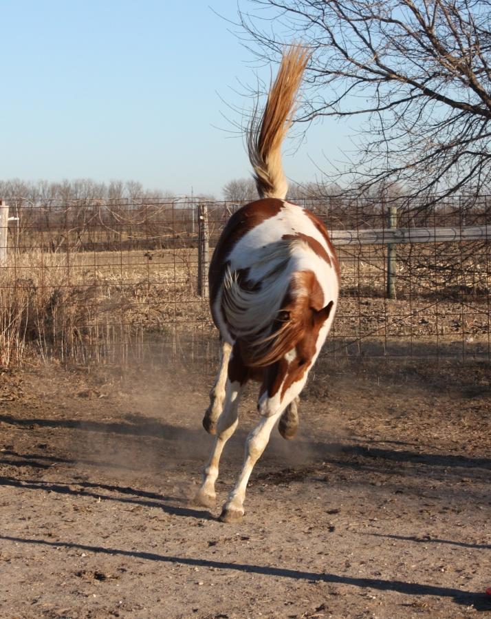 cowgirl tara 033