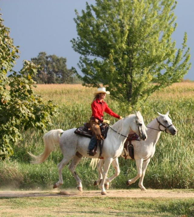 horses 2012 188